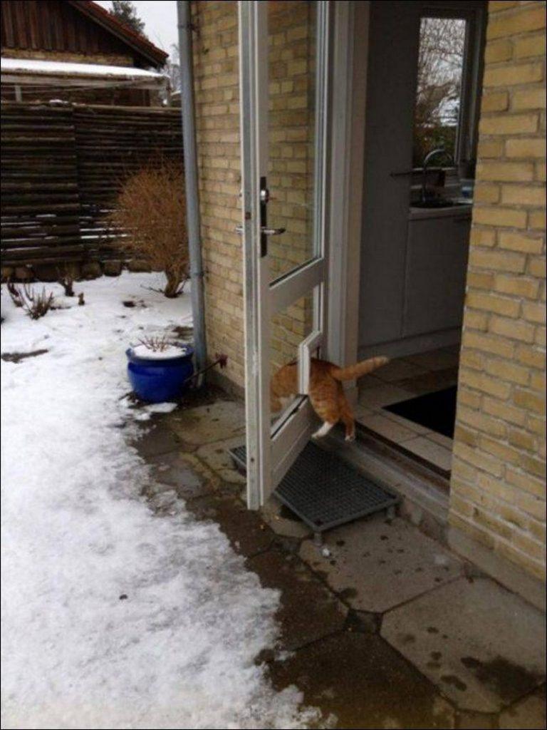 Lógica de gatos 001