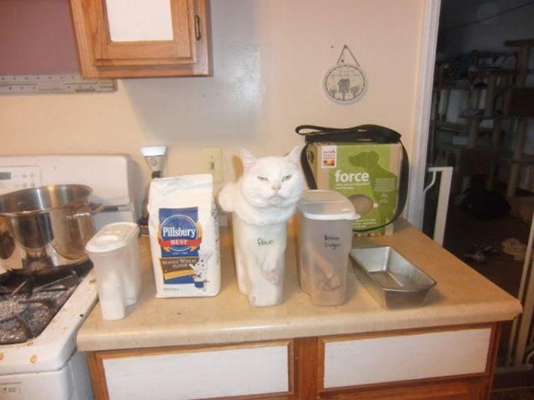 Lógica de gatos 003