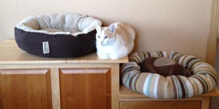 Lógica de gatos 006