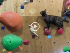 ¿Por qué los escaladores usan 'pies de gato'?