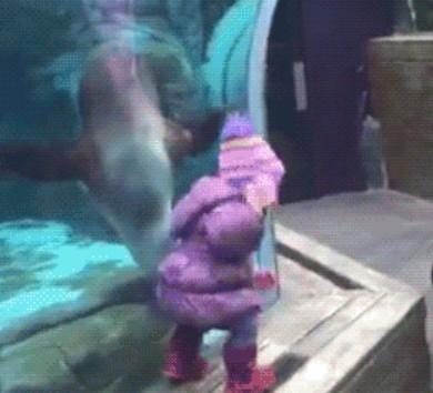 Cuando troleas a una foca…